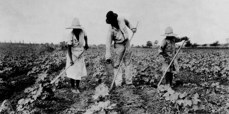 Image: A family of slaves work on a plantation.