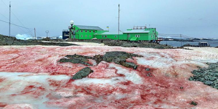 The ice around Ukraine's Vernadsky Research Base, located on Galindez Island, off the coast of Antarctica.