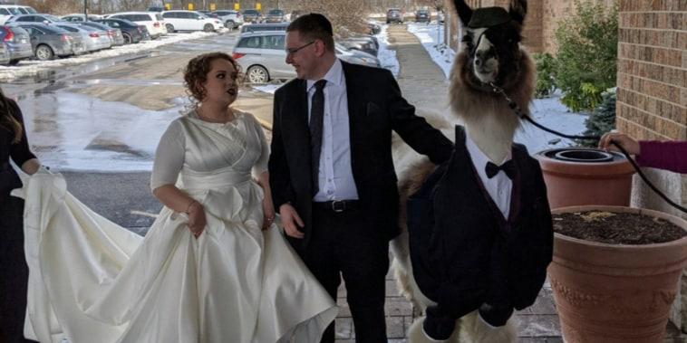 Lllama wedding