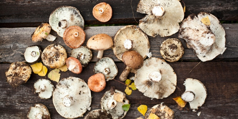 An assortment of wild mushrooms
