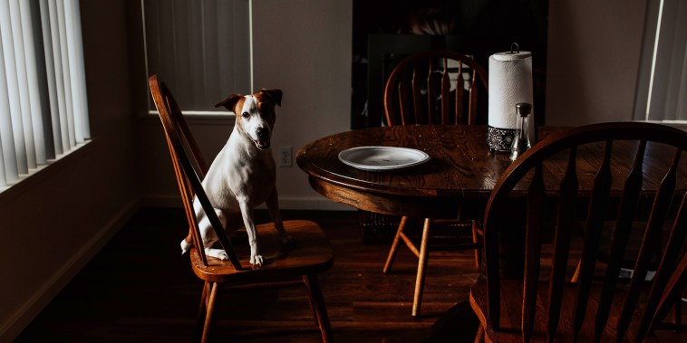 Portrait Of Dog Sitting On Wooden Chair At Home