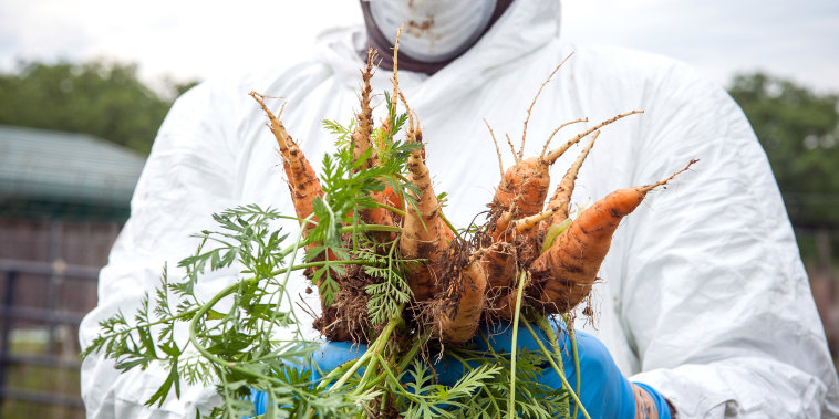 A worker wearing protective gear holds harvested carrots at Footprint Farms in Jackson, Miss., on April 6, 2020.