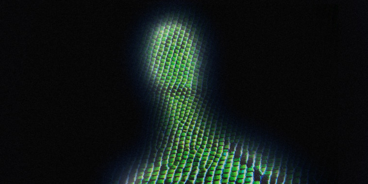 Image: Silhouette of a person with green lizard skin.