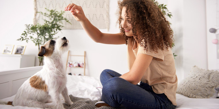 Woman training her new puppy in her bedroom