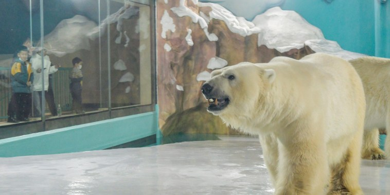 Image: Polar bear is seen at an enclosure inside a hotel at a newly-opened polarland-themed park in Harbin