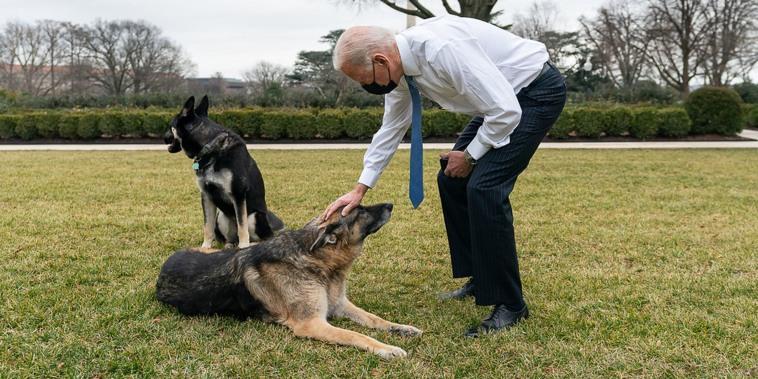 President Joe Biden, Champ and Major