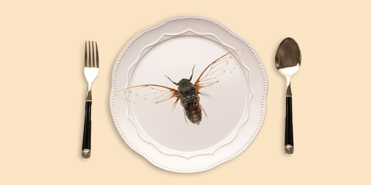 Cicada, close-up