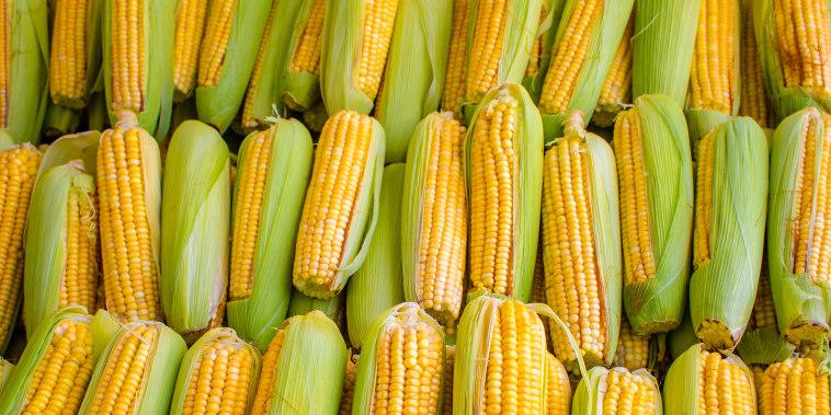 Corn cobs grouped on fair stall