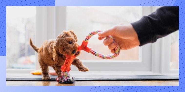 Puppy Playing Tug