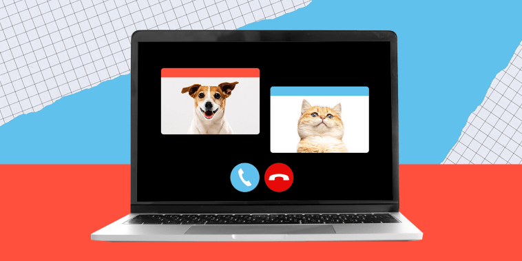 What do you most want your pet to know as you return to an office?