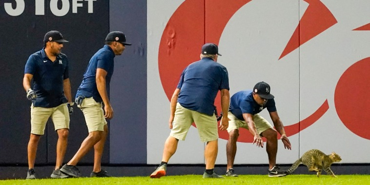 Yankee Stadium grounds crew members try to catch a cat that entered the field in the eighth inning of a baseball game between the New York Yankees and the Baltimore Orioles, Monday, Aug. 2, 2021, in New York.