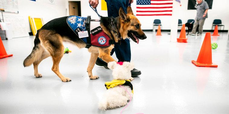DOUNIAMAG-US-military-conflict-health-animal