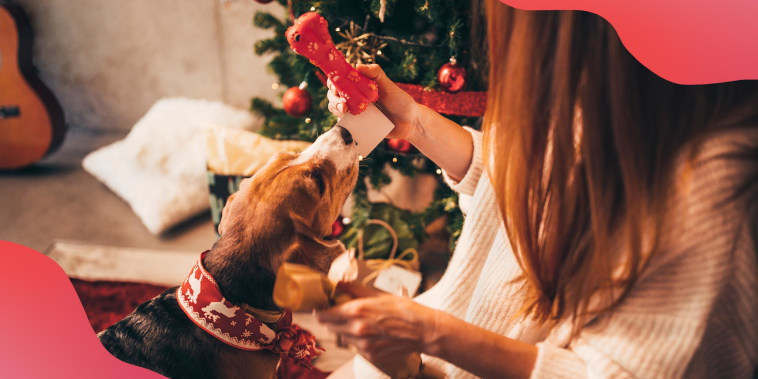 Woman giving Christmas present to cute puppy on Christmas day