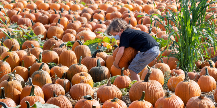 A boy wrestles a large pumpkin at the Tanaka Farms pumpkin patch in Irvine, Calif., on Oct. 5, 2020.