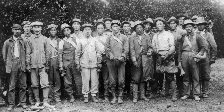 Ahn Chang Ho, Kap Suk Cho, and other workers at a Riverside orange orchard in the early 1900s.