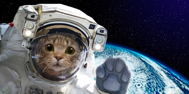 The animals that paved the way for humans in space