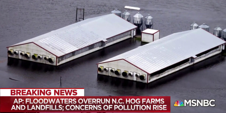 Toxic coal ash, hog farms compound extent of NC flooding disaster: Report
