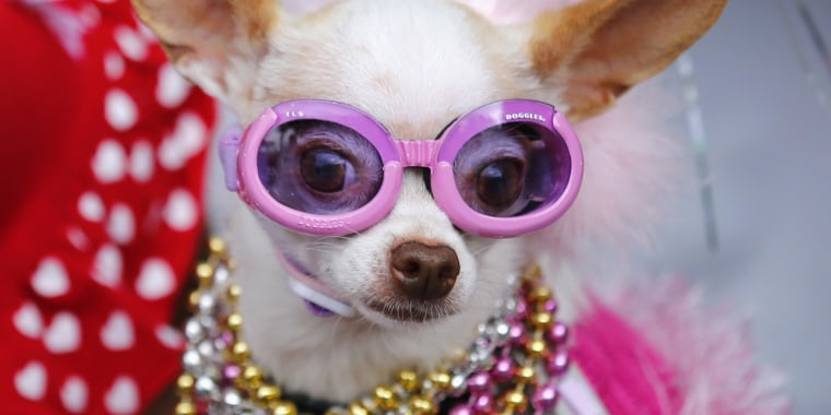 Cha-cha ching. Americans spent a record amount on their pets in 2013, and are expected to shell out more in 2014.
