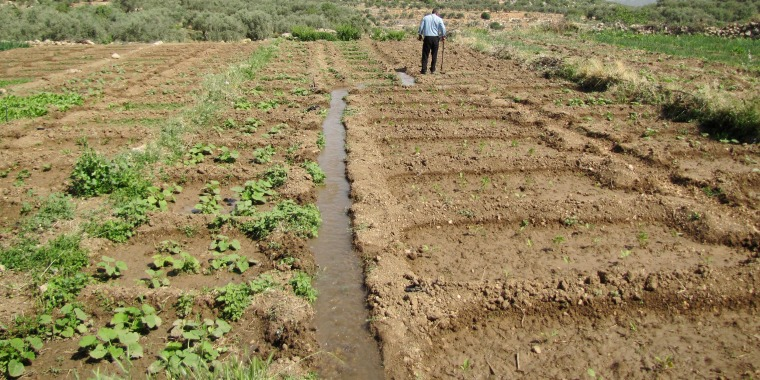 Image: A man walks through a field at the  Kfar Etzion Field School in the Wadi Fukin