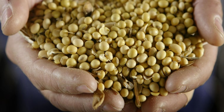 Image: A man displays a handful of GMO (genetically modified organism) Roundup Ready soybeans.