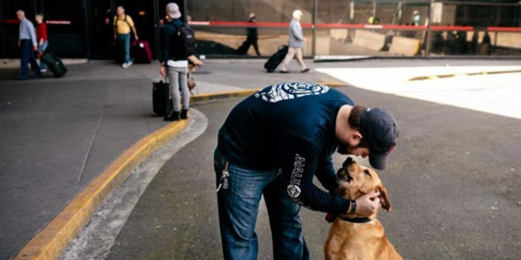 Image: U.S. Marine Corps veteran Sergeant Deano Miller, left, is reunited with military working dog Thor