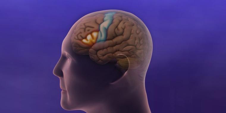 Image: Inside the Brain
