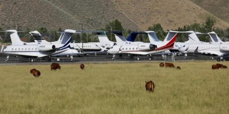 Cows graze outside the Sun Valley airport in Hailey, Idaho