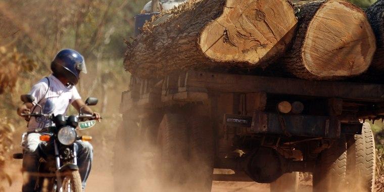 IMAGE: Illegal Brazilian logging