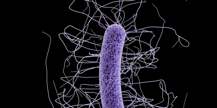 Image: Clostridium difficile