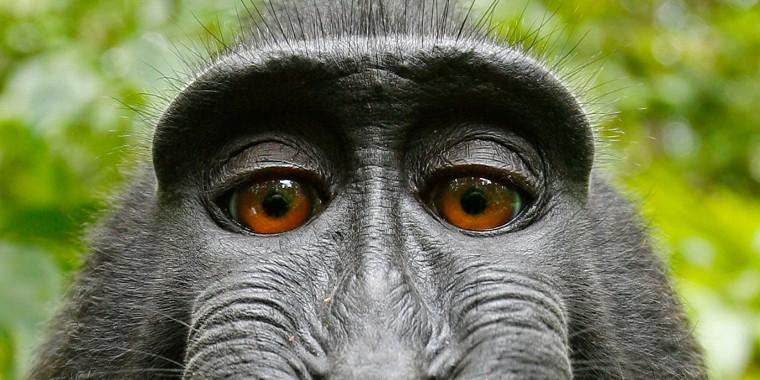 Image: Monkey Takes Photos On Camera