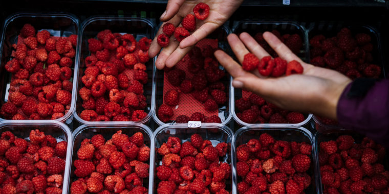 Image: Bulgarian fruit picker Elena Hoola sorts freshly picked raspberries