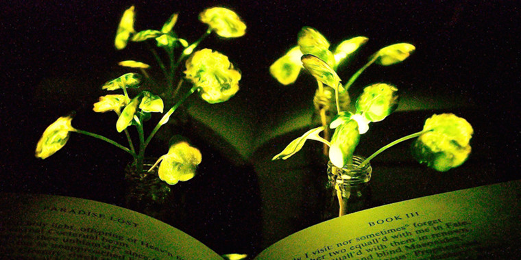 """Image: Pages of """"Paradise Lost"""" illuminated by plant light."""