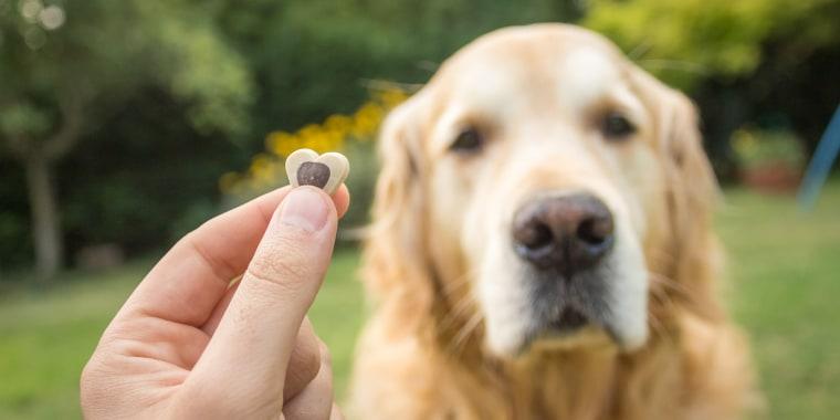 Dog with treat.