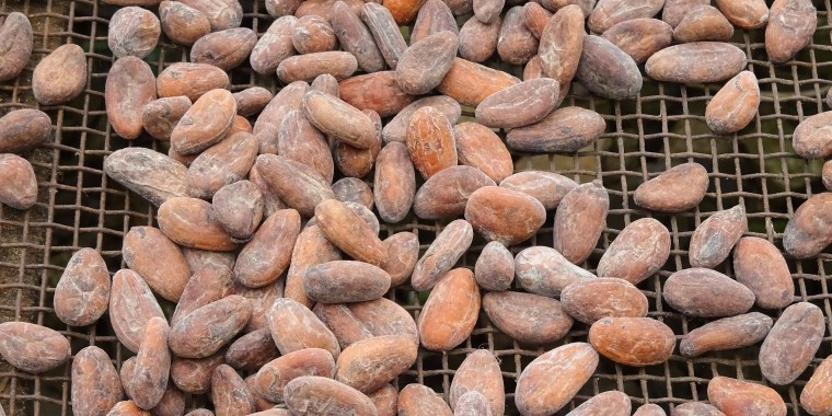 Image: Drying of cocoa beans, Sao Tome and Principe, Africa