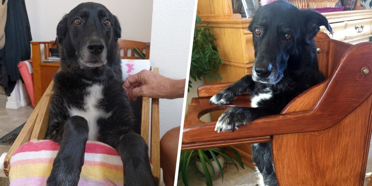 dog with esophageal disorder leaps into dog-shaped high chair for her meal