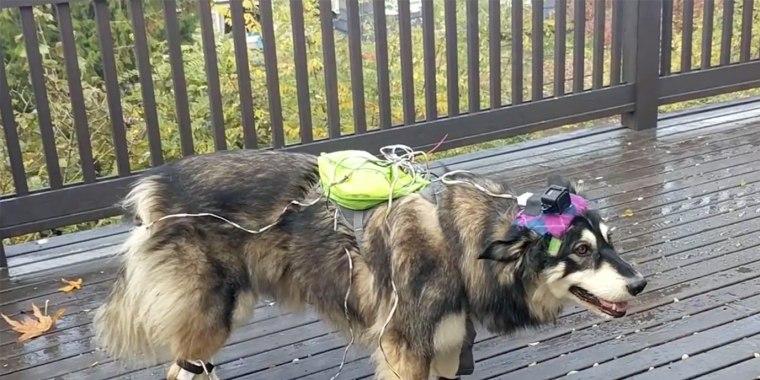 Image: Canine AI