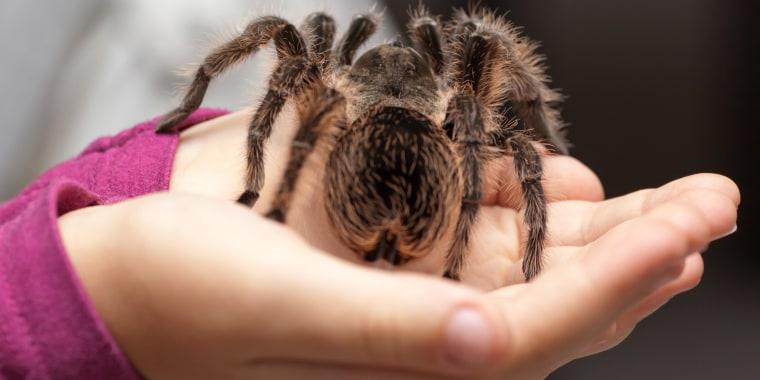 Image: Tarantula