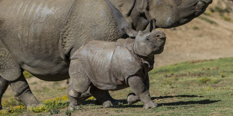 Operation to save endangered animals from extinction underway at San Diego Zoo