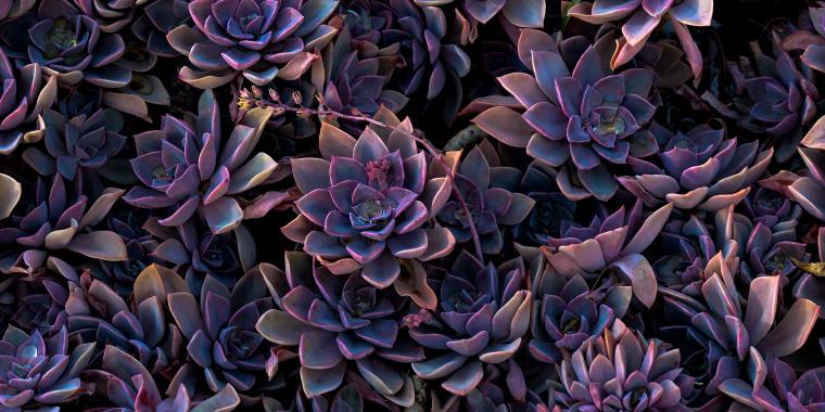 goth succulents