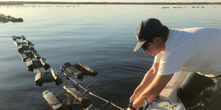 Cainnon Gregg, who operates Pelican Oyster Company, pulls a line holding his oyster bags