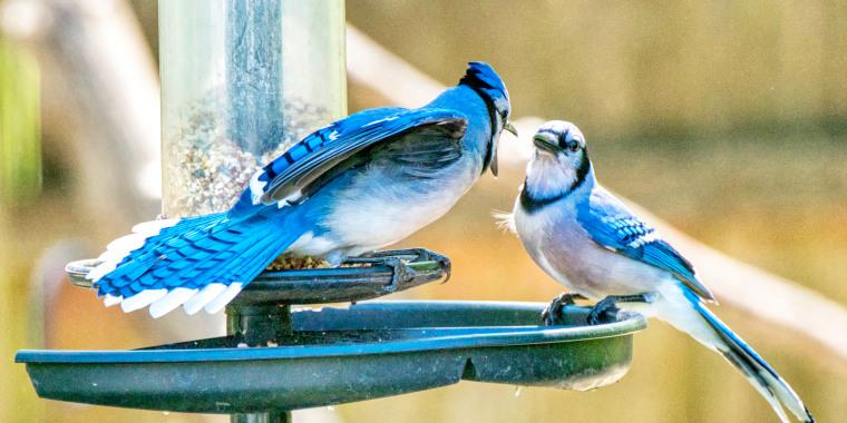 Image: Blue Jays