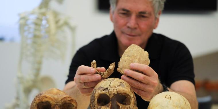 Image: Fossilized bone