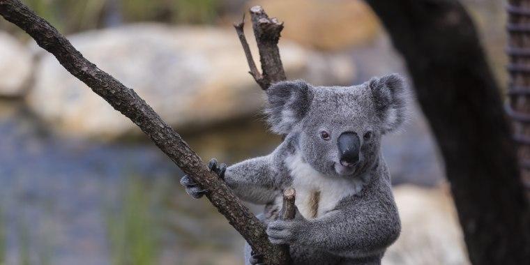 Image: The Wildlife Retreat At Taronga Official Opening