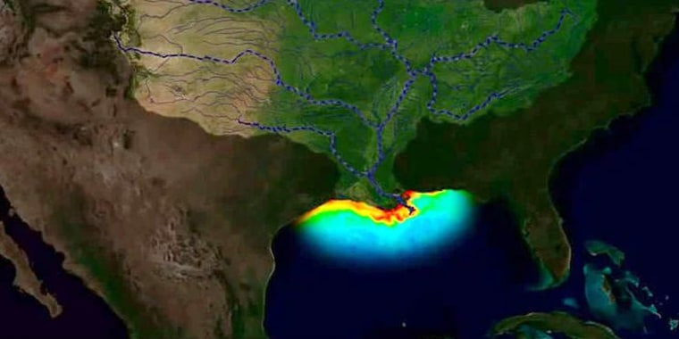 """A """"dead zone"""" measuring 6,000 square miles, the size of Connecticut, is forecast in the Gulf of Mexico this year."""