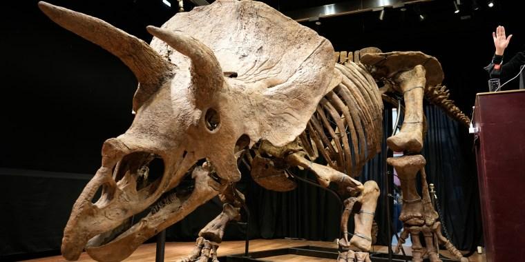 El mayor esqueleto de triceratops en el mundo, conocido como Big John, en una subasta el 21 de octubre del 2021 en París, Francia.