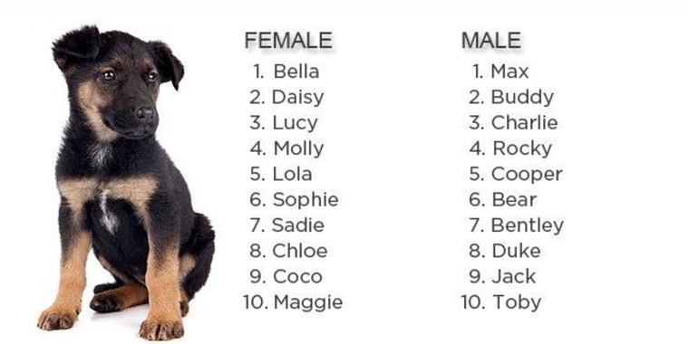 Bella female puppy - 5 4