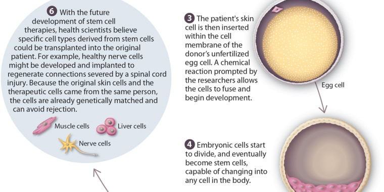 cloning and stem cell research a List of pros of embryonic stem cell research 1 an objective of therapeutic cloning is to produce embryonic stem cells, while for reproductive cloning.