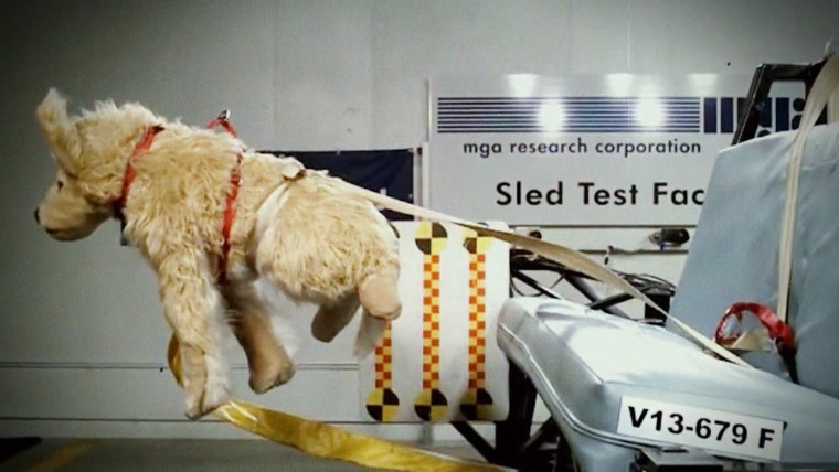 Pets In Cars Fail Crash Tests