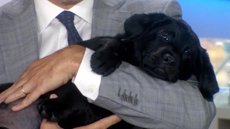 Dog Words Dog Necktie