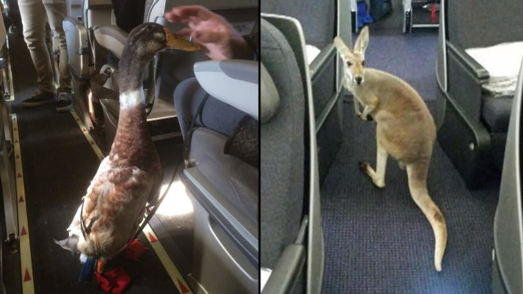 Airlines and cruise ships crack down on emotional support animals
